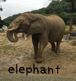 elephantぞう