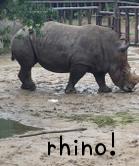 rhinoサイ